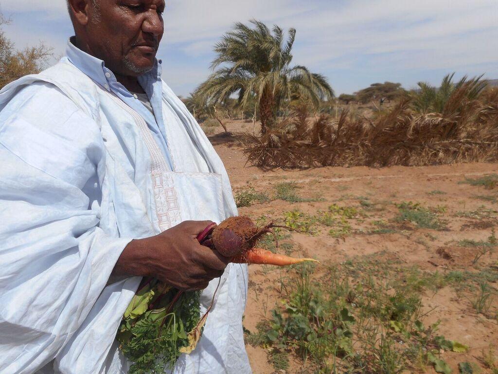 ahmed carottes