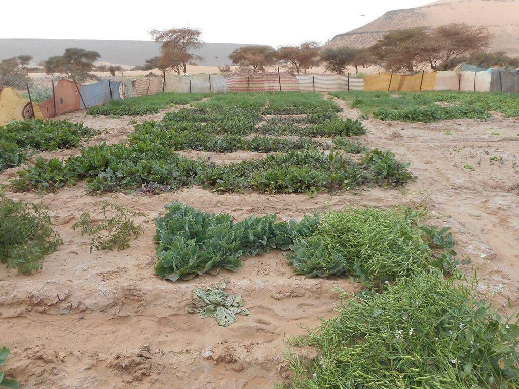 jardin elbeyed