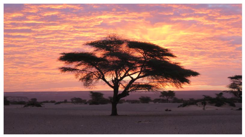 arbre el ebeye